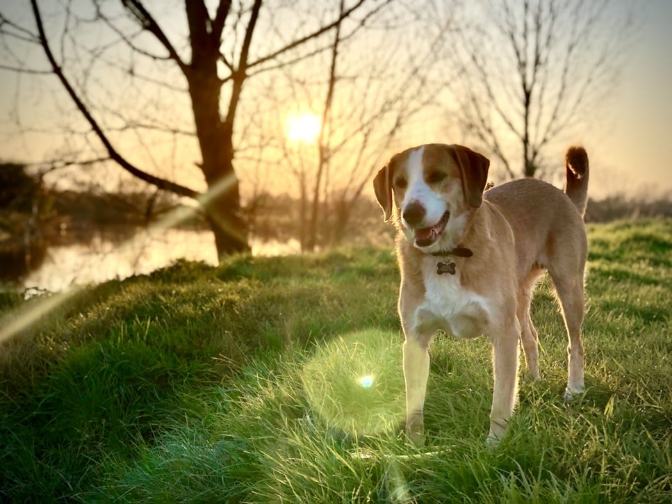 common pet allergies in dogs and cats