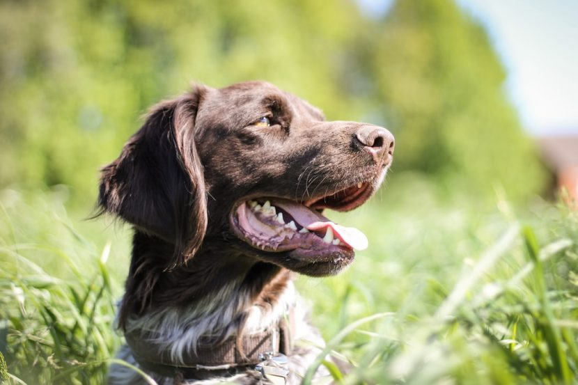 cystitis symptoms causes and treatment for dogs and cats