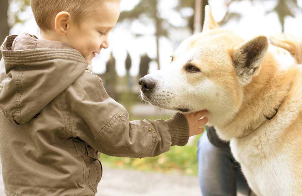 teaching dog safety to children and kids