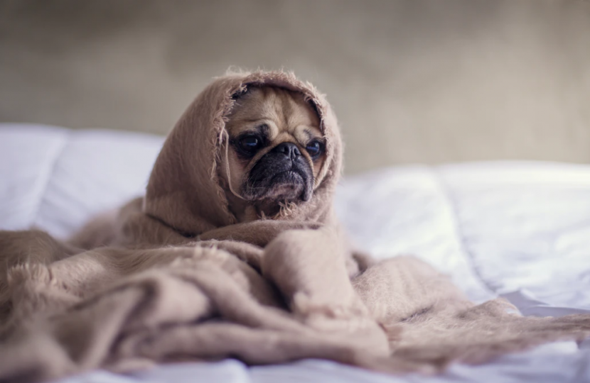 how to help dogs that are scared of thunder