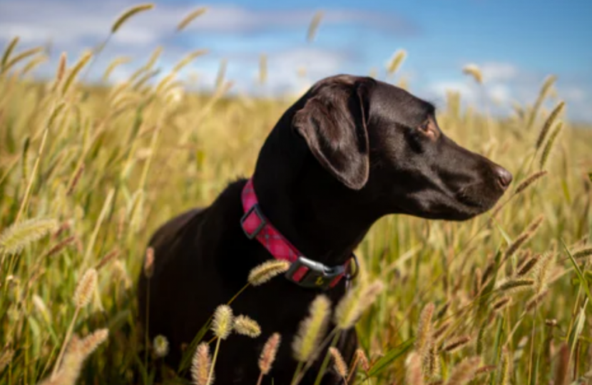 heartworm disease in dogs causes symptoms and treatment