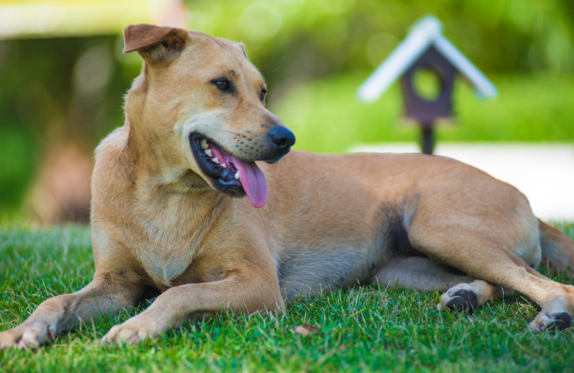 how to get rid of fleas at home
