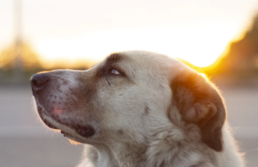 how to know when its time senior pet quality of life
