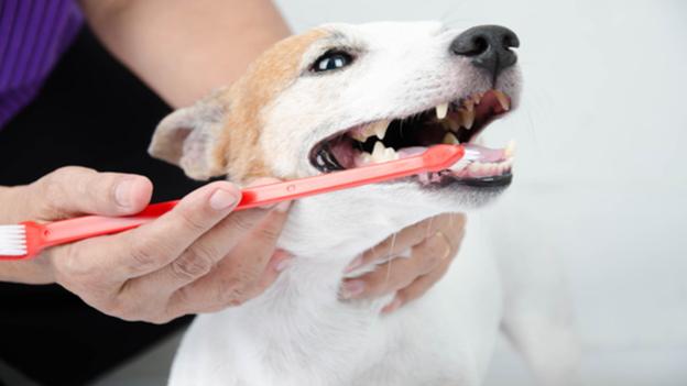 pet dental hygiene tips from Arapaho Road Animal Clinic in Richardson texas